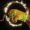 Цирки в Черусти